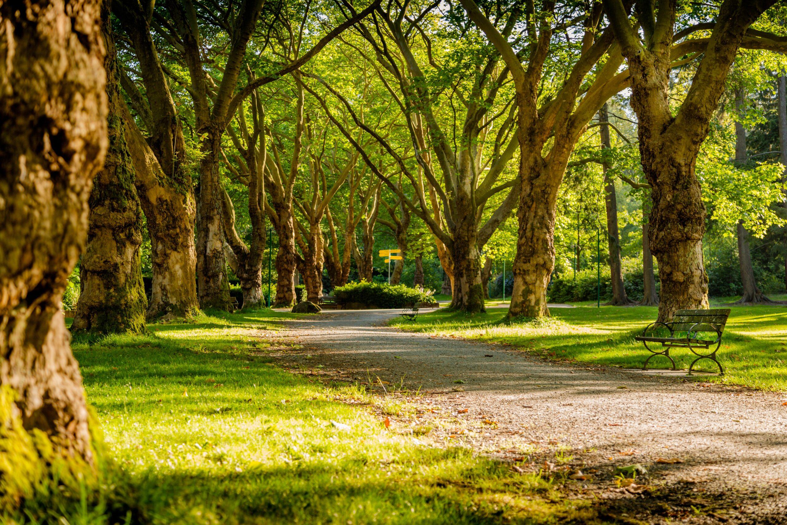 #30: Mindful Breathing in the Park (Guided Meditation)